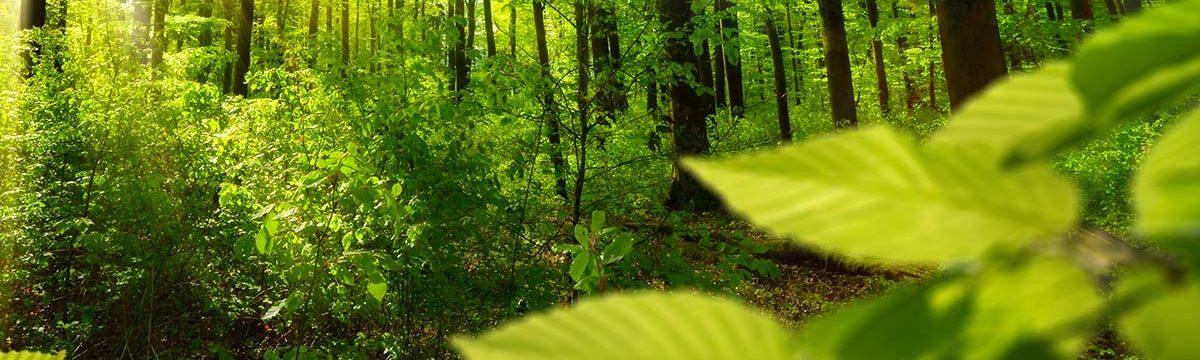 Forstbetrieb Lenz