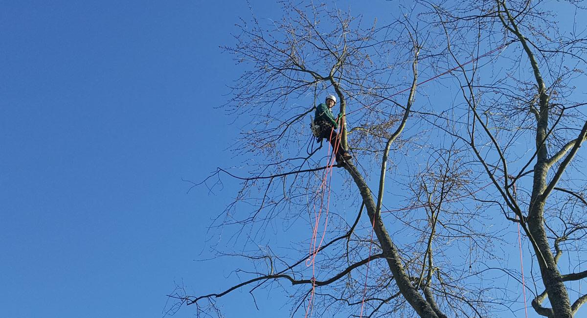 Baumpflegemaßnahmen